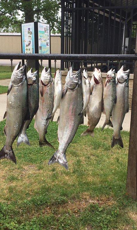 BIg catch charter fishing on Lake Michigan